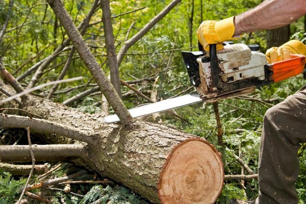 Удаляем  старое дерево по правилам