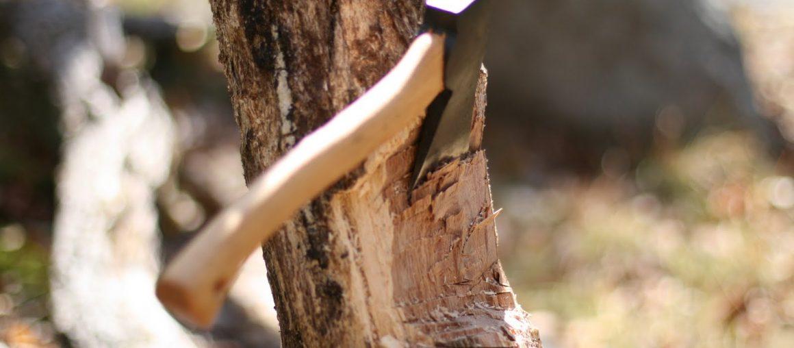 Как вырубить деревья на участке?