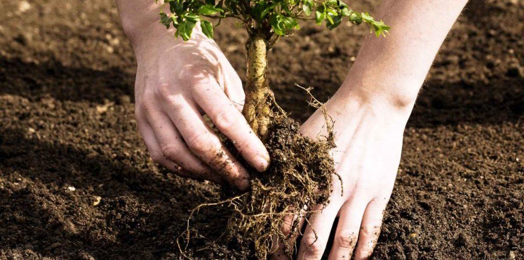 Высадка деревьев