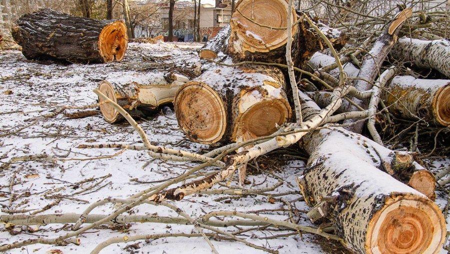 Вырубка деревьев на территории предприятия