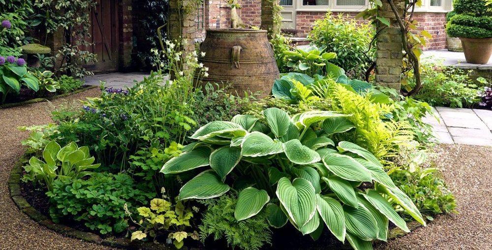 Растения для тенистого участка
